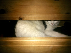 Pants (my cat) was hiding in the pants drawer